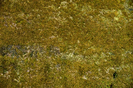 Green moss texture and background.