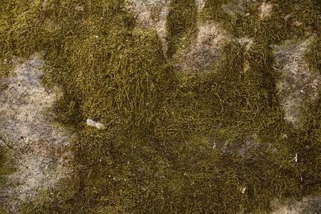 moss wall background 免版税图像