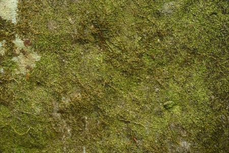 green moss texture and background