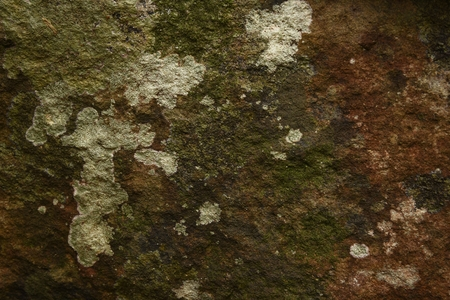 dry moss on stone in nature texture and background