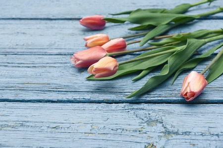 Pink tulips on wooden background, Easter, the Mothers Day Stock Photo