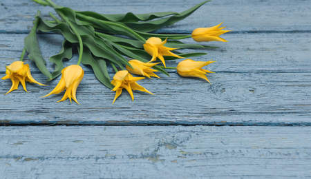 Yellow ulips on wooden background, Easter, the Mothers Day