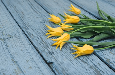 Yellow tulips on wooden background, Easter, the Mothers Day