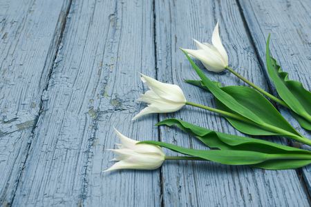White tulips on wooden background, Easter, the Mothers Day Stock Photo