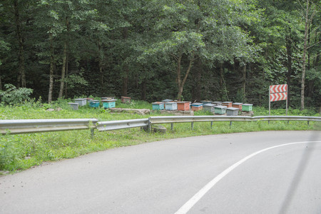 Bee hives near the road. Row of colorful wooden beehives with trees in the background