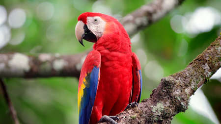 macaw close up background