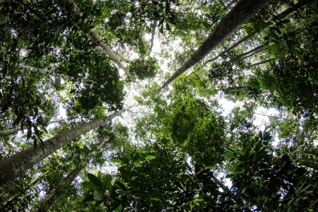 The view from the bottom using a fish-eye of the tropical rain forest photo
