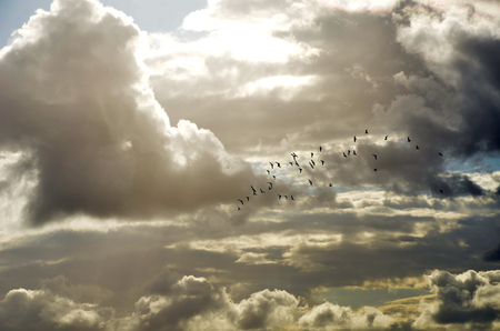 heavenly: Flock of birds flying through heavenly clouds