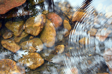 ripple: Ripples and reflections in shallow creek with pebbles