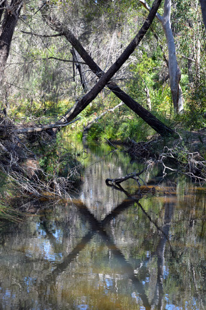 x marks the spot: X marks the spot where trees cross over a woodland creek