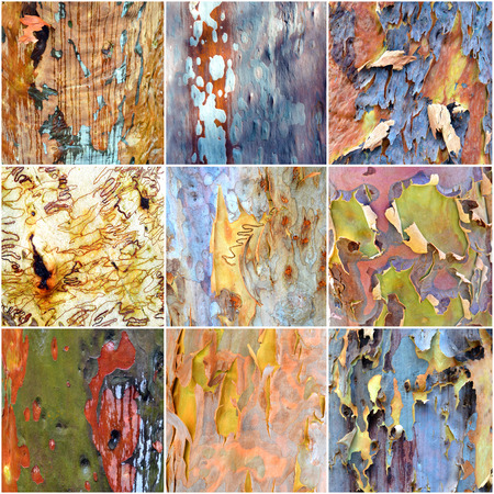 bark peeling from tree: Collage of colorful Australian gumtree bark