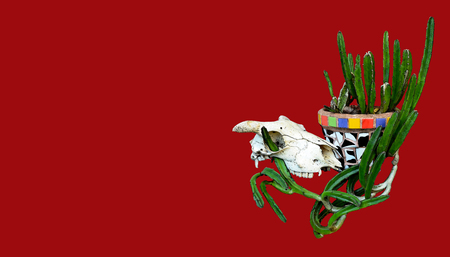 western theme: Animal (sheep) skull and Mexican mosaic pot plant with cactus on a red background. Mexican or western ranch theme. Stock Photo