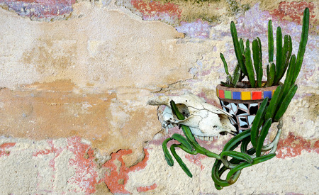 western wall: Animal (sheep) skull and Mexican mosaic pot plant with cactus on a rustic rendered painted wall background. Mexican or western ranch theme.