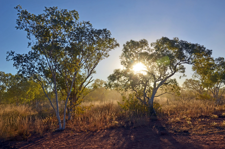 the outback: Sunlight shining through dust and woodland in northern Queensland, outback Australia Stock Photo