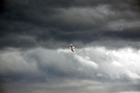 portent: Single bird (Gull) flying through dramatic clouds in a dark grey stormy sky