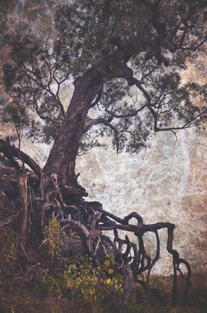 gully: Creepy old tree with exposed tangled roots on an eroded gully. Grunge textured, vintage style image.
