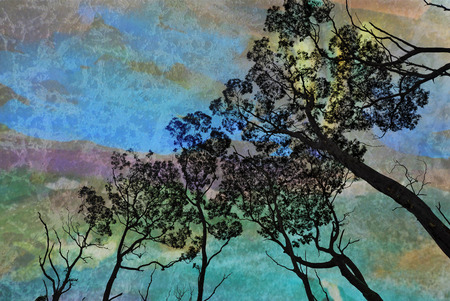 contrasted: Canopy of tall gum trees (Eucalyptus) contrasted against an aurora like evening sky. Digitally textured image. Stock Photo