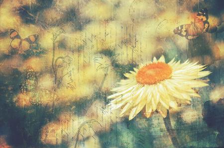 ビンテージ テクスチャの永遠のデイジーと蝶。はがきスタイルの背景コピーのテキストのための領域を持つ。