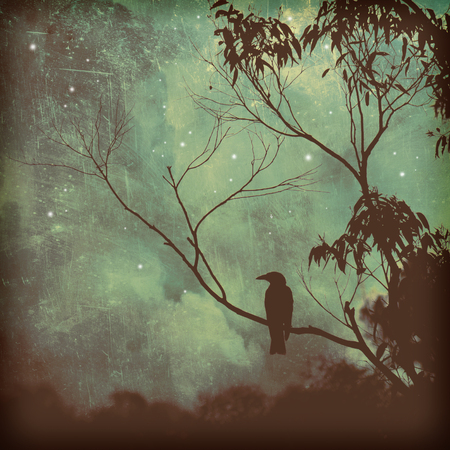 perched: Moody silhouette of a black songbird perched in a tree against a starlit evening sky. Grunge textured photo. Stock Photo