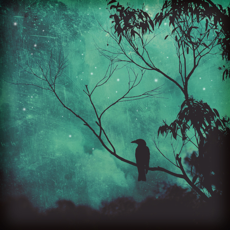 Moody silhouette of a black songbird perched in a tree against a starlit cyan evening sky. Grunge textured photo. Reklamní fotografie