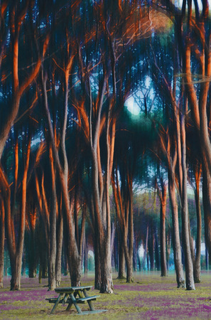 Picnic table in an ethereal forest glade. Digital illustration.