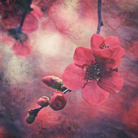 Vintage textured dark botanical red cherry blossom and buds. Faded antique oriental decorative style