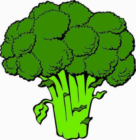 Broccoli clipart  colorful design