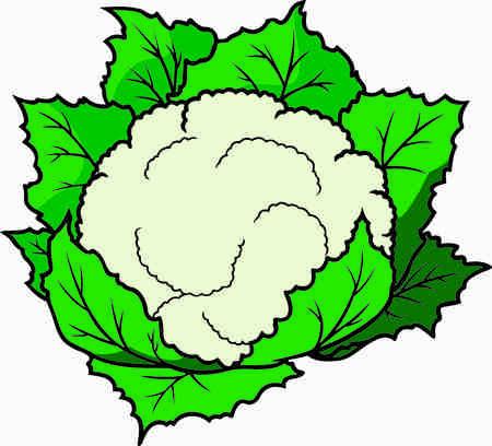 Cauliflower clipart  colorful design Banco de Imagens