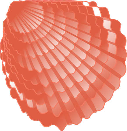 vector image of a seashell in orange shades