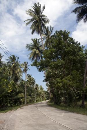 Road through coconut plantation, Tap Sakae, Thailand photo