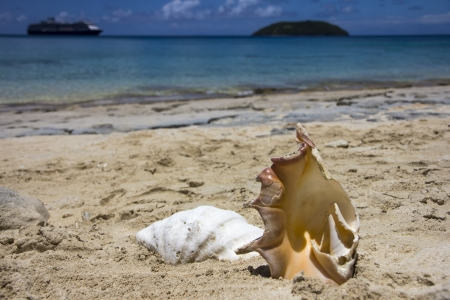 Shells on beach with cruise ship in background, Dravuni Island, Fiji photo