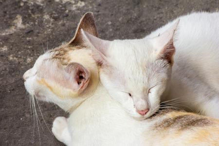 amigos abrazandose: Gatos que duermen juntos