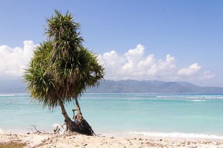 Pandanus tree on white sand beach, Gili Trawangan, Indonesia