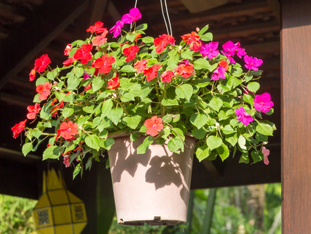 Hanging basket of bizzie lizzie flowers - Impatiens Walleriana