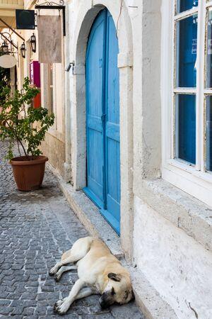Dog asleep on a cobbled street, Alacati, Izmir, Turkey 写真素材