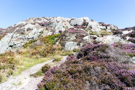 Purple heather and rugges terrain, Anglesey, North Wales, United Kingdom, Uk