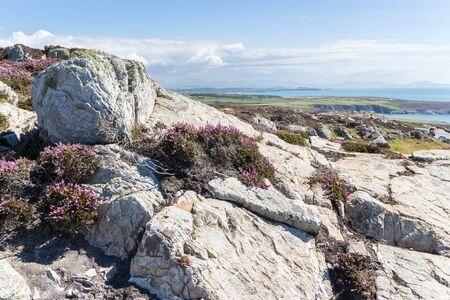 View over rocks and purple heather to the rugged coastline, Anglesey, North Wales, United Kingdom, UK Фото со стока