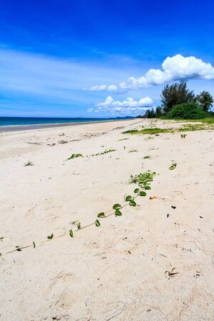 Long stretch of unspoilt beach with white sand in Chumphon province, Thailand
