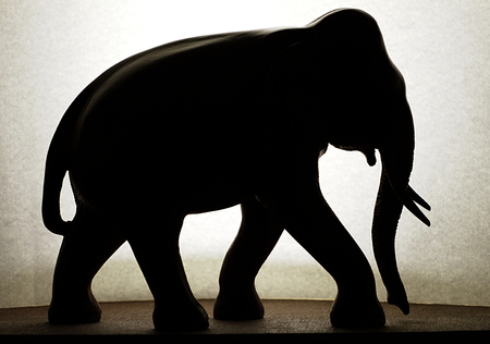 amimal: Shadow of Elephant
