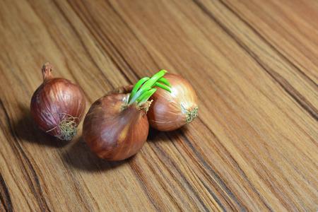 onions: onions on wood Stock Photo