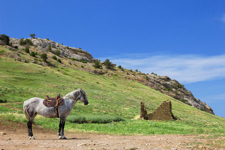 A lone horse stands in the mountains.
