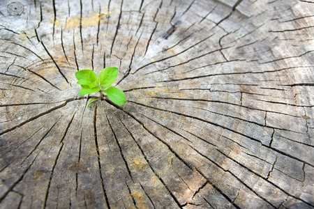 Ecology concept. Rising sprout of old wood and symbolizes the struggle for a new life Stock Photo