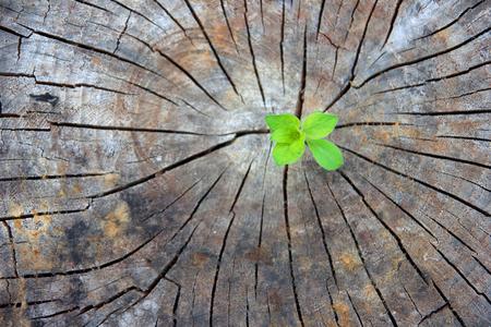 Ecology concept. Stijgende spruit van oud hout en symboliseert de strijd voor een nieuw leven Stockfoto - 73650200