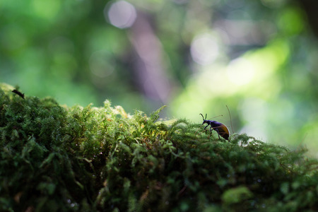 Moss in the Woods Stock Photo - 27833642