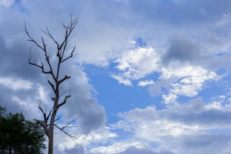 arboles secos: �rboles muertos con la nube