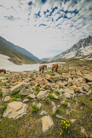 Grazing horses in the mountains photo