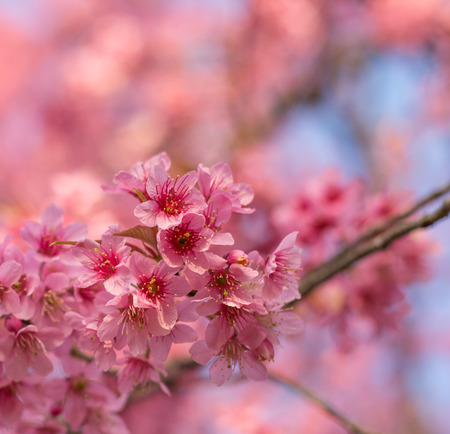 cross procesed: Beautiful spring colors of Cherry Blossom