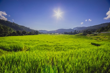 Rice Paddy with blue sky and sun photo