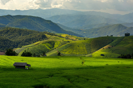 Rolling green hills and rice field photo
