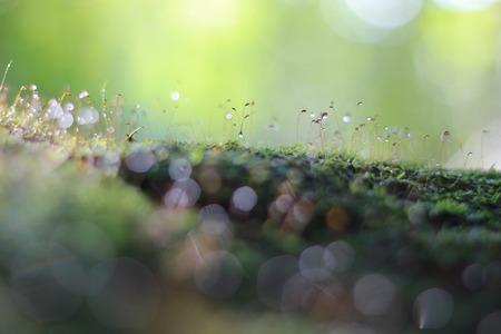 dew drop: Dew drop on moss Stock Photo